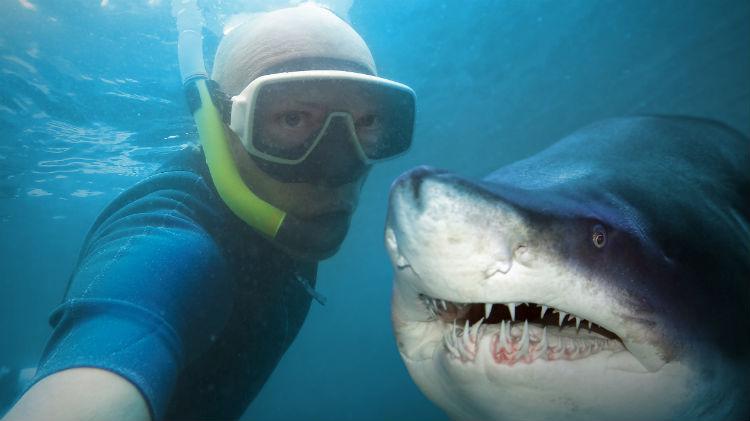 Shark Ecology