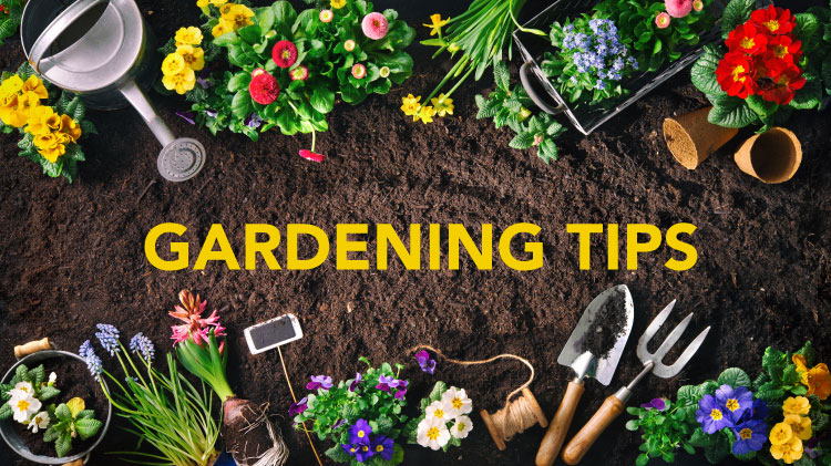 Gardening - Indoors & Out